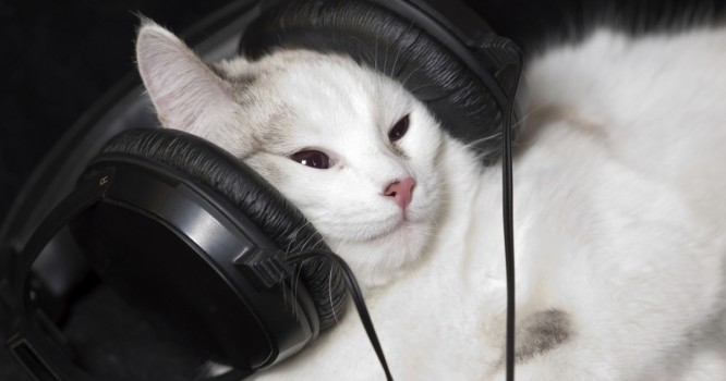 This Music Is Scientifically Proven To Improve Cats' Quality Of Life