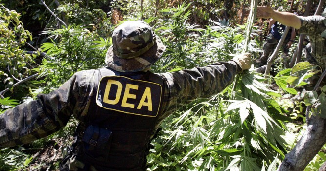 85,000 Sign Petition to Remove DEA Chief Over Public Weed Statements