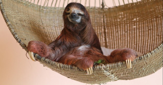 We Are All Stoner Sloth Sometimes [VIDEO]
