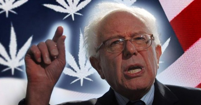 It's 420, and Bernie Says NY State Needs Law Reform